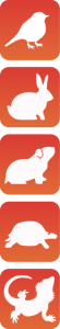 bayareabird-icons_vertical